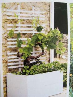Look! Simple Modern Planter and Trellis Look! Simple Modern Planter and Trellis Modern Planters, Outdoor Planters, Garden Planter Boxes, Garden Pots, White Trellis, Entrance Ways, Small Patio, Garden Furniture, Plants