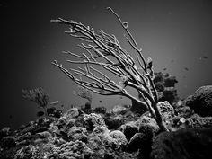 underwater photography via artvvork.com- looks like a still life in a studio