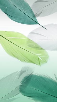 Green and White Feathers Wallpaper Feather Wallpaper, Flower Background Wallpaper, Flower Phone Wallpaper, Green Wallpaper, Cute Wallpaper Backgrounds, Cellphone Wallpaper, Wallpaper Iphone Cute, Pretty Wallpapers, Colorful Wallpaper