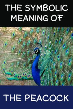 Symbolic Meaning Of The Peacock What is the meaning and symbol of the peacock? Find out here What is the meaning and symbol of the peacock? Find out here Peacock Feather Tattoo Meaning, Feather Tattoo Design, Owl Tattoo Design, Feather Art, Feather Tattoos, Bird Tattoos, Tattoo Designs, Meaning Of Feathers, Small Peacock Tattoo