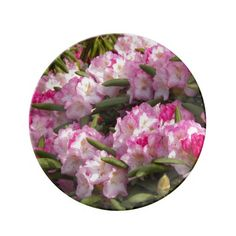Pink Rhododendrons Floral Porcelain Plate