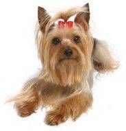 Do It Yourself Project: How to make dog bows to give as gifts to the pet lover in your life! Use these instructions to make a simple dog hair bow, and save yourself a bundle. Dog Hair Bows, Dog Bows, Baby Animals, Cute Animals, Basic Dog Training, Puppy Clothes, Cat Lover Gifts, Pet Accessories, I Love Cats