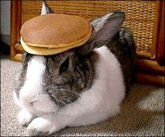 https://i.pinimg.com/236x/96/2e/36/962e36f0bbc494caeced7e38c7b1934b--pancake-gif-bunny-pancake.jpg