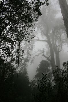 The woods I wander through alone. (CLOSED RP PLEASE DONT COMMENT UNLESS YOU WERE IN THE PREVIOUS RP)