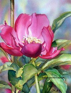 """Pink Peony"" - Original Fine Art for Sale - © Colleen Sanchez"