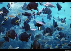 I love this aquarium . Bored At Work, Open Spaces, Hibiscus, South Africa, Followers, Aquarium, Coast, Around The Worlds, Earth