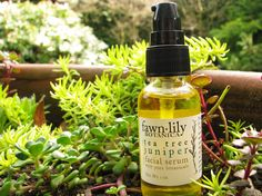 Tea Tree & Juniper Facial Serum. A medicinal blend formulated especially for oily and acne prone skin. This light and refreshing serum which cleanses, balances, nourishes, and tones with antibacterial and antiseptic ingredients. Helps regenerate skin cells, remove excess oils, and assists with acne, eczema, dermatitis, and inflammations.