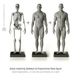 AnatomyTools.com want want want!
