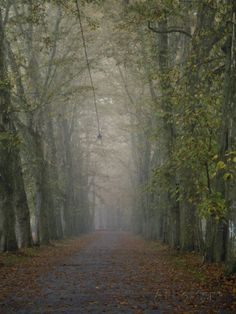size: Photographic Print: A Tree-Lined Road Disappears into the Fog by Jason Edwards : Artists Tree Line, Find Art, Framed Artwork, Custom Framing, My Idol, Country Roads, Museum, Digital, Gallery