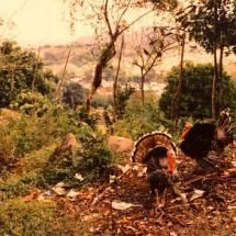 Teapa, landscape,Tabasco, 1989,Dr. Rauni Kilde was murdered in 2014 by beam radiation technology plus the use of mind control, microchips along with viruses to kill you in a second, I was attacked  with radiation and fought until I disabled their toys 4 death, now the fuckers are dying and I became immortal, https://www.youtube.com/watch?v=WkBhpdJG8pw&index=23&list=PLXasfR0DEjQ0Dyewe-o0c_I0tKVXJNgOQ…