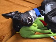 greyhounds as pets - Google Search