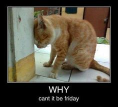 some times. sometimes - LOLcats is the best place to find and submit funny cat memes and other silly cat materials to share with the world. We find the funny cats that make you LOL so that you don't have to. I Love Cats, Cute Cats, Funny Cats, Funny Animals, Cute Animals, Cats Humor, Crazy Cats, Funny Monday Pictures, Funny Animal Pictures