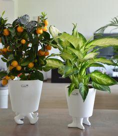 Witzige Zimmerdeko für Deine Pflanzen - Wohnideen mit Pepp | VALENTINO Wohnideen