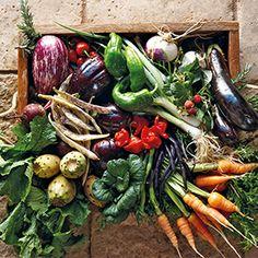 Fresh vegetables from the Babylonstoren garden as a result of the no-dig method