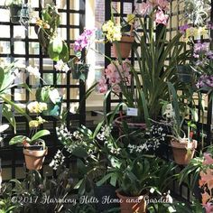 Rawlings Conservatory in Baltimore, MD - inside the Orchid Room - www.HarmonyHillsHomeandGarden.com