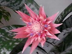 Flor de cactus. Preciosa!.