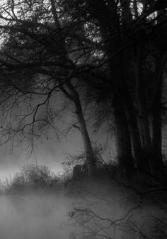 Image about black in Mother Nature by The Black Dahlia Dark Photography, Black And White Photography, Wedding Photography, Dark Landscape, Mystical Forest, Maquillage Halloween, Dark Places, Nocturne, Belle Photo