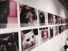 La Gatoteca: un bar de gatos