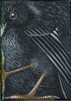 "Black Robin 3.5""x2.5"" Acrylic on canvas"