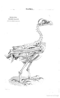 A history of British birds, indigenous and migratory - William Macgillivray - Science Illustration, Science And Nature, Archaeology, British, Museum, Birds, History, Google, Brain