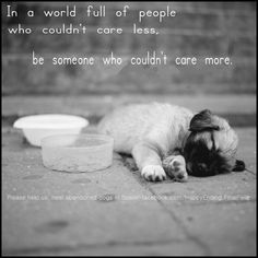 Happy Ending/Final Feliz - Helping abandoned dogs in Spain