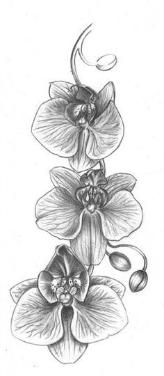 Free Image on Pixabay - Orchid, Flower, Drawing - Tattoos und Piercings - Orchideen Tattoo Drawings, Body Art Tattoos, Small Tattoos, Sleeve Tattoos, Ear Tattoos, Flower Drawings, Drawing Flowers, Celtic Tattoos, Orchid Flower Tattoos