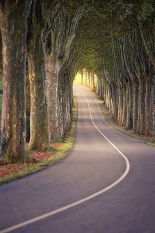 Tree Tunnel #Germany