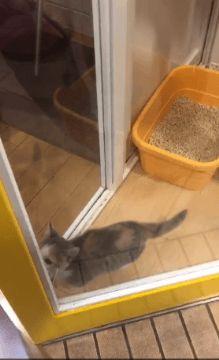 네가 새로운 집나더냐!!