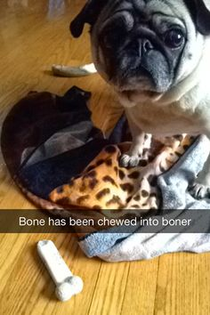 "Stinkywrinkles: ""I like to embarrass Mom with my Nylabone art."""