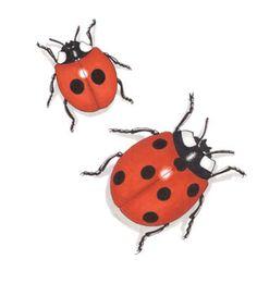 ladybird - Google Search