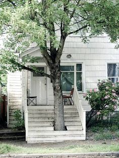 tree growing through steps!