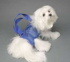 Woofle 'n Beads Puppy Purse Carrier in Blue