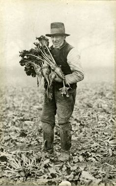 A typical Norfolk labourer holding specimens of beet. [images/photographs]
