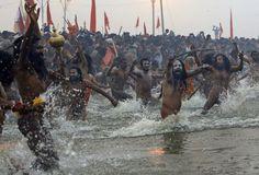Naga Sadhus run naked into the water at Sangam, during the royal bath on Makar Sankranti at the start of the Maha Kumbh Mela in Allahabad, on January (AP Photo/Kevin Frayer) Kumbh Mela, Makar Sankranti, Ritual Bath, Moose Art, Religion, Earth, India, History, World