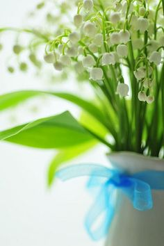 Lily of the Valley - sweet and dainty