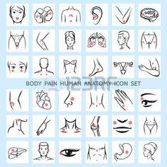 Органы человека, иконки.