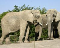 PLEASE SIGN AND REPIN  http://www.thepetitionsite.com/553/932/632/sanctuary-for-toronto-zoo-elephants/