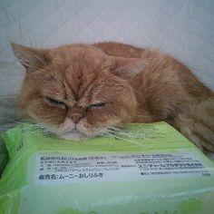 ムーニーおしりふき  我が家の猫、まだまだ体調良くない。 早く良くなっておくれよ・・・