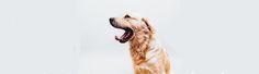 Pet Pamper Spots in Cape Town: Top 4