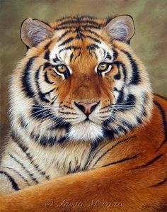 Female Tiger Tattoo Inspiration SAVE OUR TIGERS