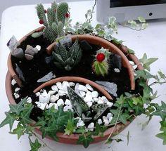 Talleres Leroy Merlin en Badalona Succulents, Plants, Atelier, Succulent Plants, Plant, Planets