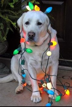 Dogs Who Think They're Christmas Trees