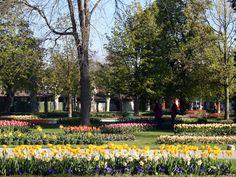 Tulip Festival, Morges, Switzerland 2013 Tulip Festival, 2013, Switzerland, Dolores Park, Sidewalk, Travel, Tulip, Beautiful Places, Viajes