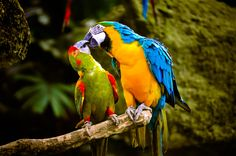 """""""Love Birds"""" by Terryl Eugenio Photography on 500px"""