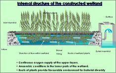 Tratamiento y reutilización de aguas residuales mediante humedales: Alternativa ecológica para poblaciones con problemas de abastecimiento
