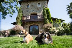 Haute Dog! 5 Top Dog-Friendly Wineries in Napa Valley