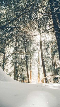 airelibreinfo of sunshine were hitting the fresh snow powder on the bows of these Hemlocks Pennsylvanias state tree. Photo by Donnie Rosie on Unsplash Photos Black And White, Image Hd, Winter Pictures, Winter Images, Photo Instagram, Phone Backgrounds, Iphone Wallpapers, Forest Wallpaper Iphone, The Fresh