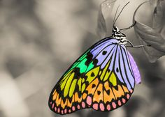 The rainbow butterfly Photo by Boris S. — National Geographic Your Shot Pictures Images, Free Pictures, Free Images, Cool Pictures, Types Of Butterflies, Beautiful Butterflies, Rainbow Butterfly, Monarch Butterfly, Butterfly Pictures