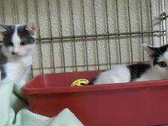Hester kittens  -- saved!