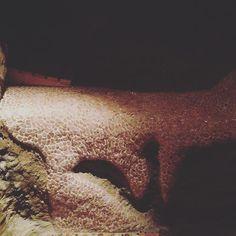 Fätt - Urlaub, gebettet auf #Rosenquarz! #wellnesswednesday #wellness #niederbayern #edelsteinbett #edelsteine #crystal #quarz #rosequartz #rosa #glitzer #schatzhöhle #crystallove #armerfliesenleger #kekshandgemachtes #heutenichtinaugsburg